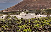 Vineyards were first planted soon after the eruptions of 1736 by punching through lava and ash to find usable soil.
