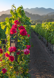 Picture of Napa Valley