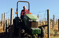 Growing exceptional grapes for over 30 years in the Carneros region